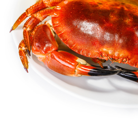 crab meat: Tasty prepared crab on the plate isolated on white background, food still life border, delicious healthy nutrition