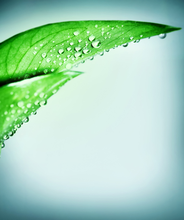 dew drop: Fresh green natural border, leaf covered with dew drops over clear blue background, purity and harmony, spa concept