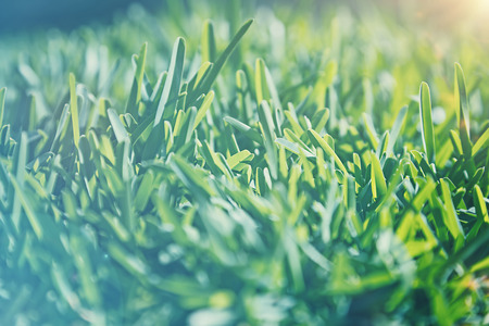 cinematic: Vintage style background, cinematic look photo of a green grass field in sunlight, old fade effect,  shallow dof, natural dreamy image