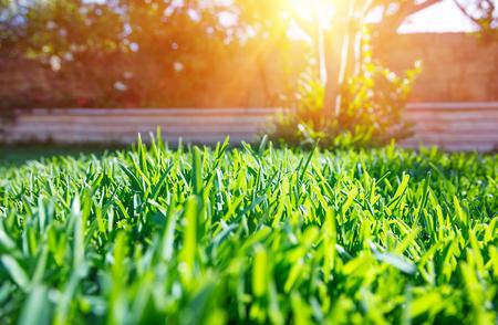 Vista hermosa en el patio trasero linda en un día soleado, fresco césped de hierba verde en la luz del sol, el paisaje en el jardín, la belleza de la temporada de verano Foto de archivo