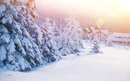 pine forest: Beautiful landscape of winter resort, little cozy houses near fir trees covered with snow, luxury wintertime holidays in Alps, Europe Stock Photo