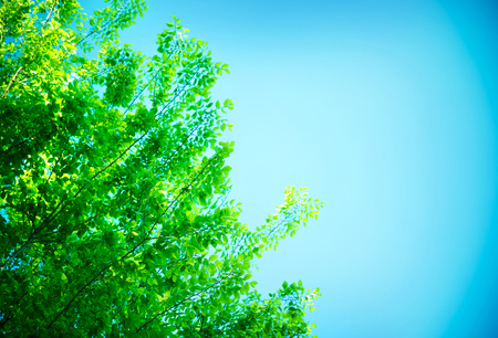 foliar: Fresh green tree leaves border over blue clear sky background, abstract natural backdrop with copy space, beauty of spring nature