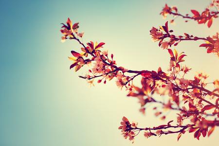 Mooie bloeiende boom in zonnige dag, bloemen grens over blauwe hemel achtergrond, vintage stijl, oud filmisch beeld, stijlvolle retro ansichtkaart Stockfoto