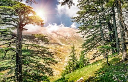 Cedars of Lebanon, prachtige oude ceder bos in de bergen, verbazingwekkende Libanese natuur, rustige landschap van een Nationaal Park Reserve, Bsharre dorp, ten noorden van Libanon