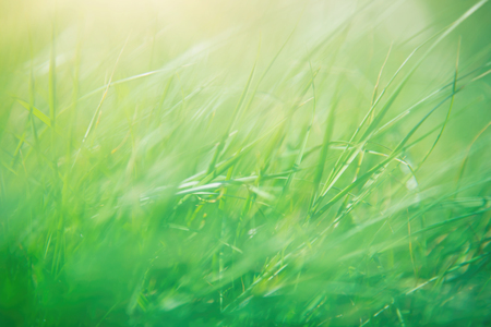 shallow focus: Green grass abstract background, spring sunny day, shallow depth of field, beautiful natural wallpaper Stock Photo