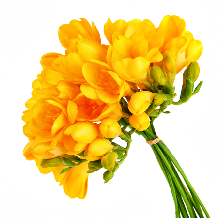 bunch of flowers: Bouquet of a beautiful yellow freesia flowers isolated on white background