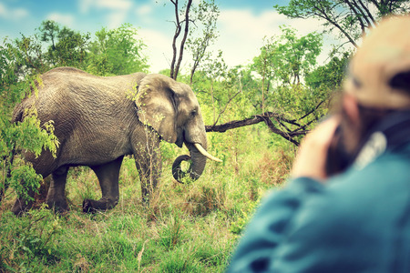 Photographer taking pictures of an African elephants, wild animal