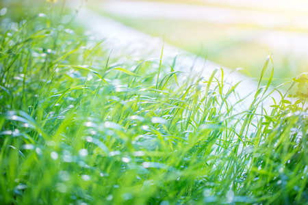Fresh green grass field, nice warm sunny day, good weather, beautiful spring nature, natural background wallpaper  Stock Photo