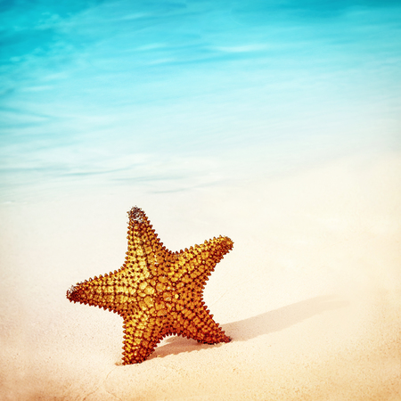 star fish: Closeup photo of a beautiful sea star in the clean sand on the beach, conceptual backgrund of a summer vacation,  copy space
