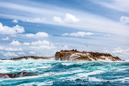 Colonia de focas salvajes en la isla pedregosa, grandes animales marinos, hermoso paisaje de Océano Atlántico, turismo de safari extrema, Hout Bay Seal Island, la belleza de Sudáfrica