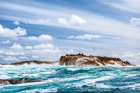 Wild seals colony on the stony island, great sea animals, beautiful landscape of Atlantic ocean, extreme safari tourism, Hout Bay Seal Island, beauty of South Africa Stock Photo