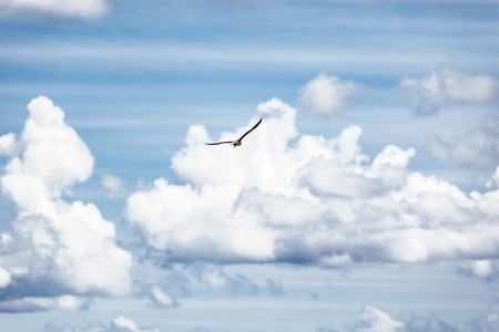 Bird in the sky, blue cloudy sky background, beautiful seagull flying high up in the sky, conceptual image of getaway and freedom