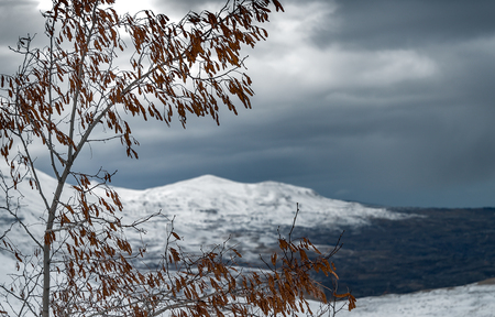 Winter landscape in overcast weather, view on the gray sky and snowy mountains through the old dry tree, cold and frosty winter, Cedars Mountains, Lebanon Stok Fotoğraf
