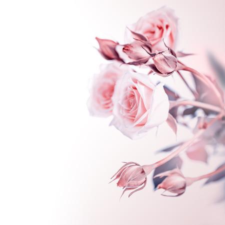 Schöner leichter rosa Rosenblumenstrauß lokalisiert auf weißem Hintergrund, Weinleseartfoto, romantischem zartem Geschenk für Hochzeitstag oder Valentinstag