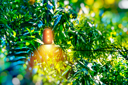 Bright lantern among green foliage, beautiful golden street lamp shining in tropical fresh tree leaves, abstract natural background, exotic summer holidays