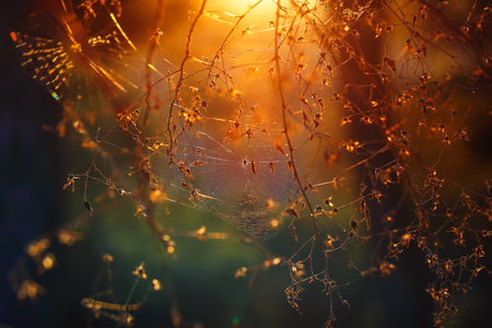 Spiderweb between trees in the forest, abstract natural background, amazing magical view, beautiful mild orange sunset light background,  nature of woodland