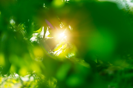 Fresh green leaves background, rays of the sun make their way through the leaves of the tree, springtime rebirth of nature concept  Banco de Imagens