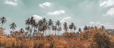 Palm trees plantation, beautiful tropical landscape, exotic farmland, countryside of Sri Lanka, summer vacation on the tropical island Фото со стока - 107953485