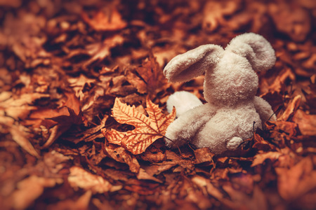 Closeup photo of a little soft toy rabbit sitting on the ground covered with old dry leaves in the forest, awaiting for a child, sadness and frustration concept Stock Photo