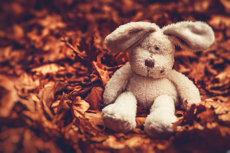 Closeup photo of a little sad plush rabbit sitting on the ground covered with old dry tree leaves in the forest, lonely and abandoned small friend of some kid 版權商用圖片