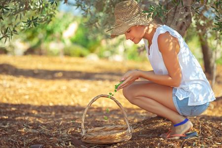 Farming girl picking up berries, nice female cultivating olives, tasty organic nutrition, natural antioxidant, happy healthy life in a countryside Standard-Bild