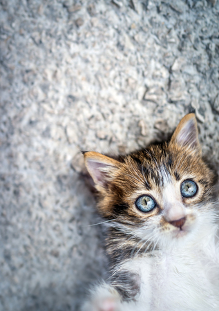 Portrait d'un adorable petit chat allongé sur un fond d'asphalte, avec plaisir à passer du temps à l'extérieur, doux animal de compagnie jouant