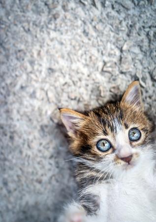 Portret van een schattige kleine kat die op een asfaltachtergrond ligt, met plezier tijd buitenshuis doorbrengt, lief huisdier spelend