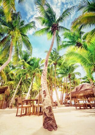 Bright sunny day on the luxury tropical beach resort, cute cozy restaurant under fresh green palms, happy summer vacation in Mexico, North America 写真素材