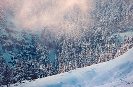Amazing winter landscape, fir tree forest in the mountains covered with snow, perfect place for winter holidays, Lebanon