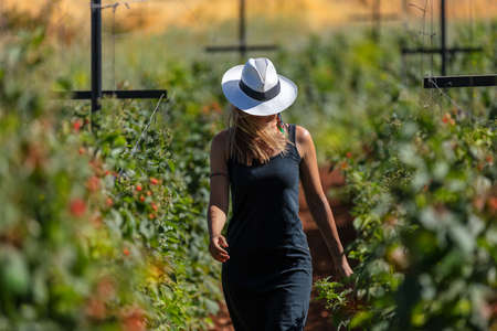 Young Stylish Girl Walking in the Ranch. Working in the Garden. Cultivation of Fruits and Vegetables. Harvest Season Concept. Banque d'images