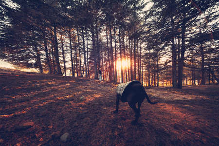 Walking a dog in autumn forest, young woman with pleasure spending time in the park with her dog in sunny day, autumnal activity, happiness and leisure concept