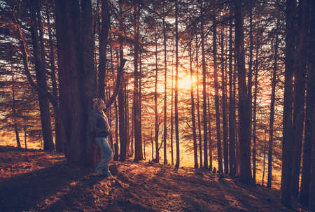 Woman walking in the autumn forest, pretty girl spending morning in the park, enjoying mild yellow sunlight breaking through tree trunks, serene fall weekend Banque d'images