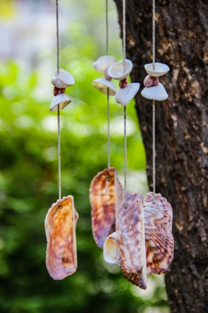 accessories seashell mobile in my home and decor Stock Photo - 21742221