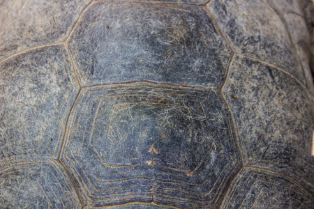 carapace: A texture of Turtle carapace