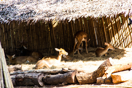 slammer: The deers in the zoo Stock Photo