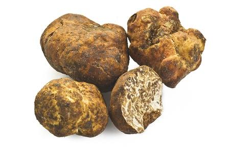 white truffle: white truffle on the white