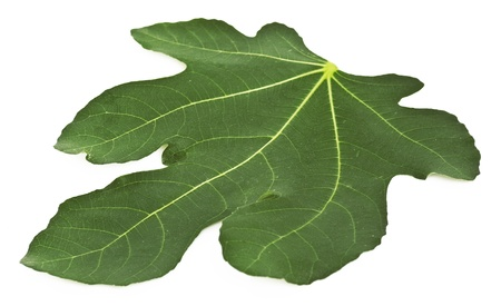 Fig leaf isolated on a white background Stock Photo
