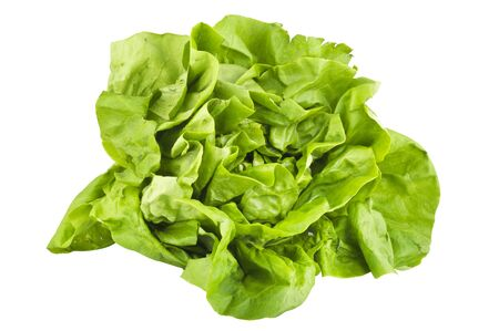 vibrat color: Lettuce on the white background