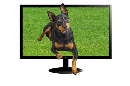 TV 3 D with dog in three dimension photo