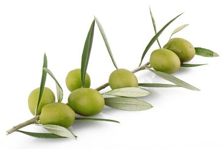 hoja de olivo: las aceitunas en el fondo blanco Foto de archivo