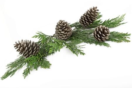 Pine Cones and Needles on white photo