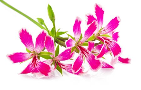 flowers on the white background Stock Photo - 10593466