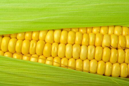 mais: Fresh corn close up on white