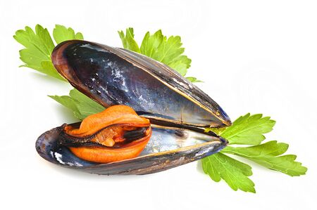 black mussel close up on white background Stock Photo