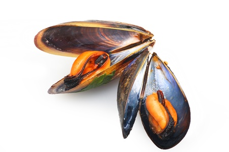 lithic: black mussels close up on white background Stock Photo