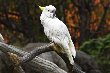 White parrot on a branch photo