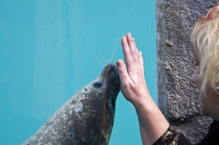 Sea lion, plays with a woman Stock Photo - 12900661