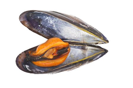 molluscs: black mussels close up on white background Stock Photo