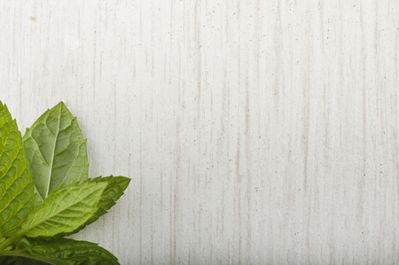 Background texture white wood and mint leaves
