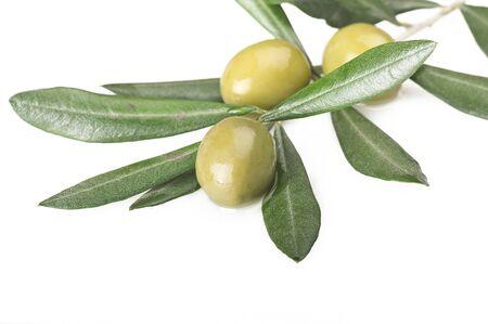 foglie ulivo: ramo d'ulivo con tre olive sul bianco Archivio Fotografico